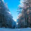 Forest path in winter time with blue sky above — стоковое фото #11848878