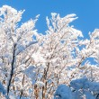 Branches full of snow in the sun — Stock Photo