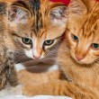 Curious and focused young kittens — Stock Photo