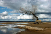Krajobraz wybrzeża pustynia samotny drzewo przed chmury. — Zdjęcie stockowe