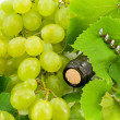 Bottle of wine with grape vines — Stock Photo #11872887