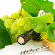 Bottle of wine with grape vines — Stock Photo #11873401