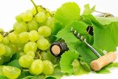 Bottle of wine with grape vines — Stock Photo