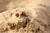 Ladybug city — Stock Photo