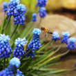 Flower and Bee - 