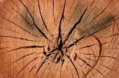 Wooden log — Stock Photo