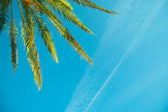 Palm treen on a blue sky — Stock Photo