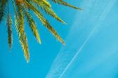 Palm treen on a blue sky — Stock Photo