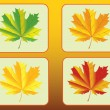 Set of of autumn maple leaves — Stock Vector