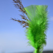 Green feather — Foto de stock #11666615