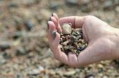 De la mano con piedras — Foto de Stock