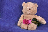 Pink roses and a teddybear — Stock Photo