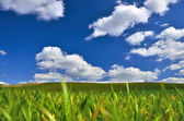 Green field and blue sky — Stock Photo