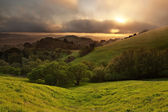 Foggy California Meadow Sunset — Stock Photo