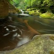 Dense Forest Waterfall — Stock Photo #11660753