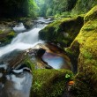 Dense Forest Waterfall — Stock Photo #11660758