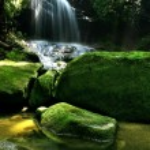 Rain Forest Waterfall — Stock Photo