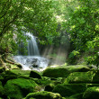 Rain Forest Waterfall — Stock Photo