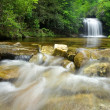 Dense Forest Waterfall — Stock Photo