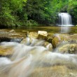 Dense Forest Waterfall — Stock Photo #11660795