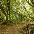 Stock Photo: Dense forest thicket