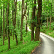 Country road through green mountain forest - Stock Photo