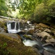 Dense Forest Waterfall — Stock Photo #11660829