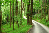 Estrada do país através da floresta de montanha verde — Fotografia Stock