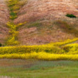 California Mustard Bloom - Stock fotografie