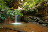 Golden Cascade on Berry Creek Trail, Big Basin, CA — Stock Photo