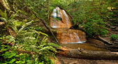 Golden Cascade in Big Basin, California — Stock Photo