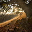 Sunny path under oak on idyllic hillside - Stock Photo
