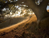 Sunny path under oak on idyllic hillside — Stock Photo