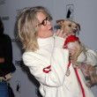 Diane Keaton and Rescue dogs up for adoption - Stock Photo