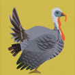 Stock Photo: A Turkey