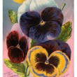 Antique image of pansies seed packet — Stock Photo