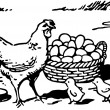 A black and white version of an illustration of a hen with two small chicks and a large basket of eggs — Stock Photo #12124101