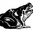 Stock Photo: Black and white version of illustration of toad