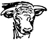 A black and white version of a portrait of an aged bull — Stock Photo