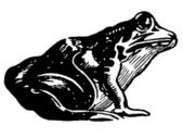 A black and white version of an illustration of a toad — 图库照片