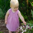 Toddler in pink picking flowers — Stock Photo
