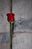 Red rose on grey barnwood — Stock Photo