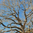 Winter's bare branches — Stock Photo
