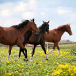 Stockfoto: Three horses