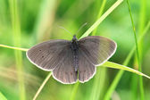 Butterfly on grass — Photo