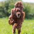 Dog run — Stockfoto