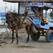 Carriage on Gili Island, Indonesia — Stock Photo