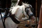 Horse on Gili Island, Indonesia — Stock Photo