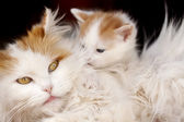 Cat and kitten hug isolated on black background — Stock Photo