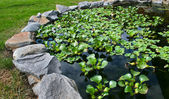 Natural stone pond — Stock Photo